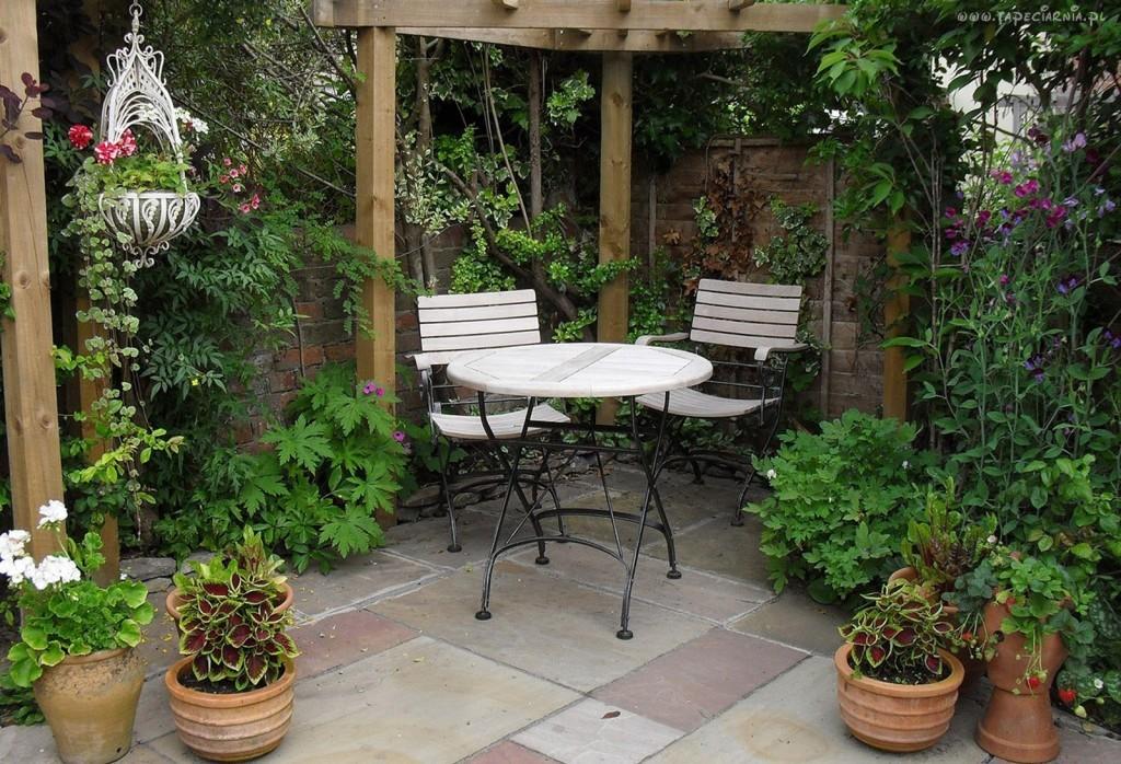 Растения вьющиеся, для беседки: обустройство места отдыха в саду