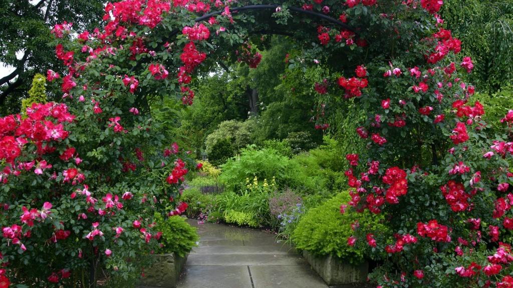 Розы плетистые в дизайне сада