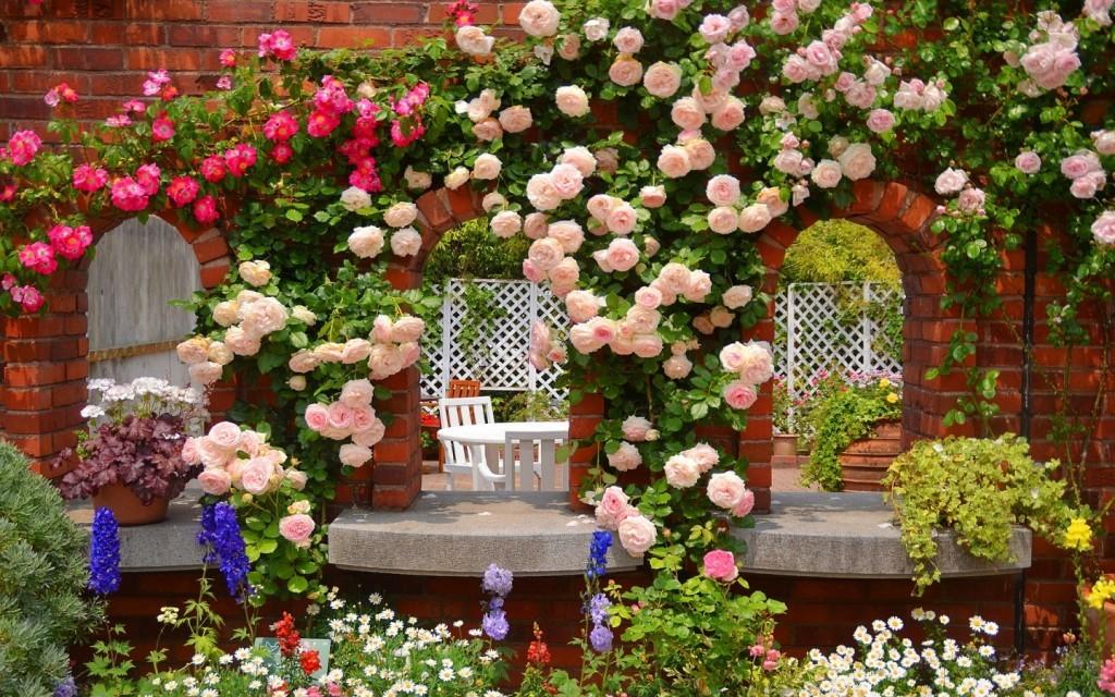 Стены беседки, обвитые плетущейся розой
