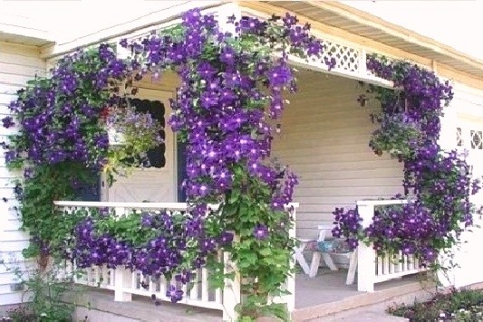 Цветы в коробках в домодедово