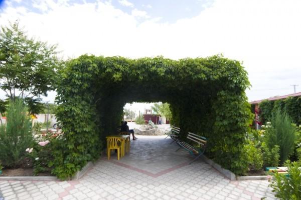 Садовая беседка из винограда