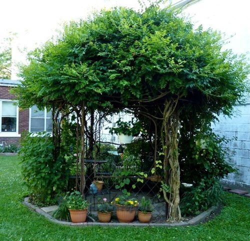 Беседка украшенная растениями