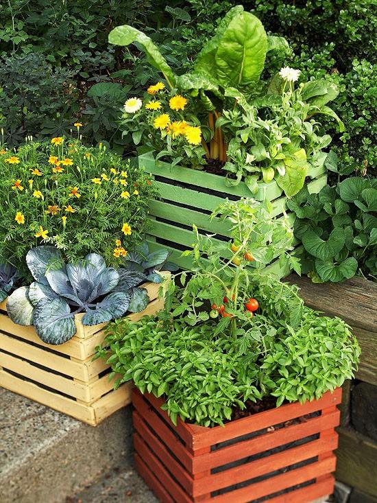 Оформление террасы овощами