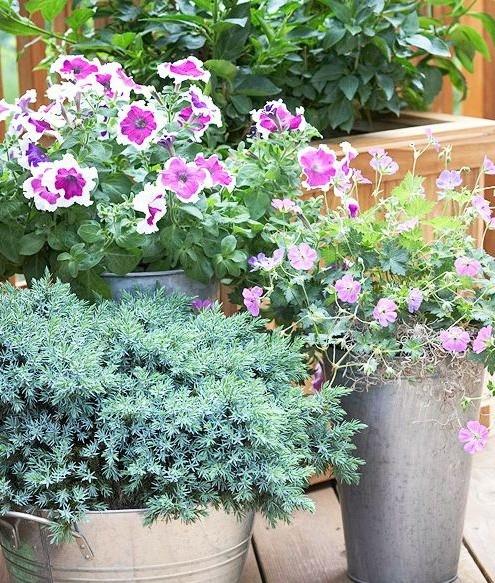 Высадка растений для террасы
