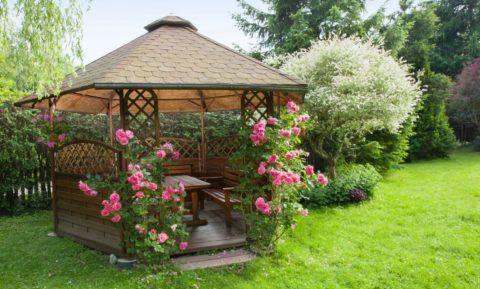 Пара кустов цветущих роз сделает отдых ещё приятнее