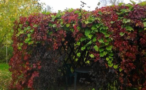 Растения с разноцветной листвой у беседки